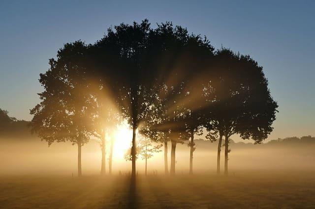 木々と美しい光